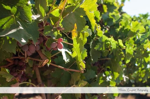 Danuba's Beautiful wine country